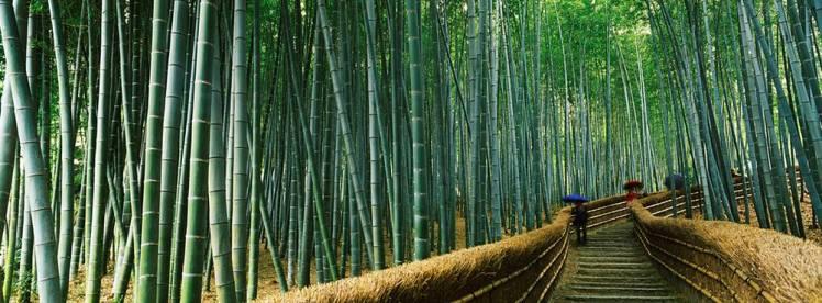 bambú2